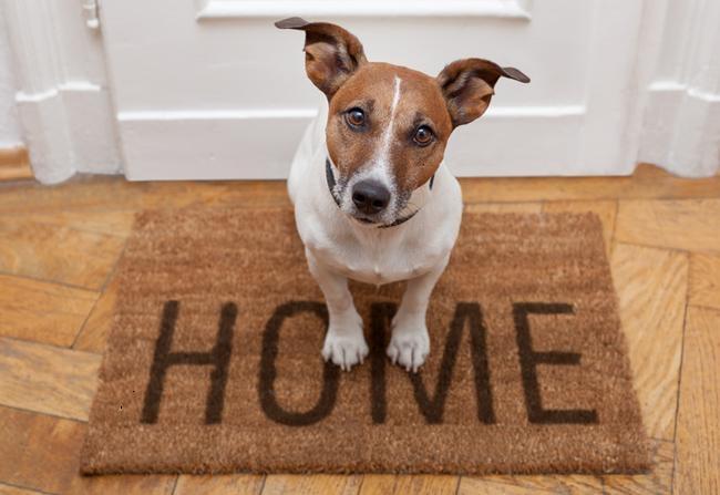 Вызвать ветеринарного врача на дом нижневартовск